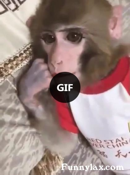 You're Beautiful - FUNNY 9GAG ANIMALS PETS VIDEO #humorsgifs You're Beautiful #animals #monkey #humorsgifs