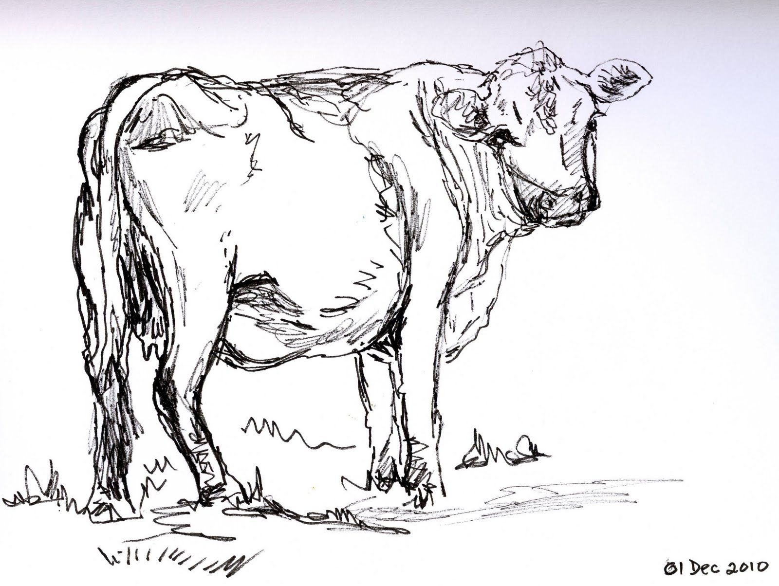 Uncategorized Drawing Of Cow love you like a cow cows pinterest sketches and drawings cow