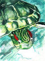 Turtle Paintings - A Turtle Who Likes To Eats Fish by Rene Capone