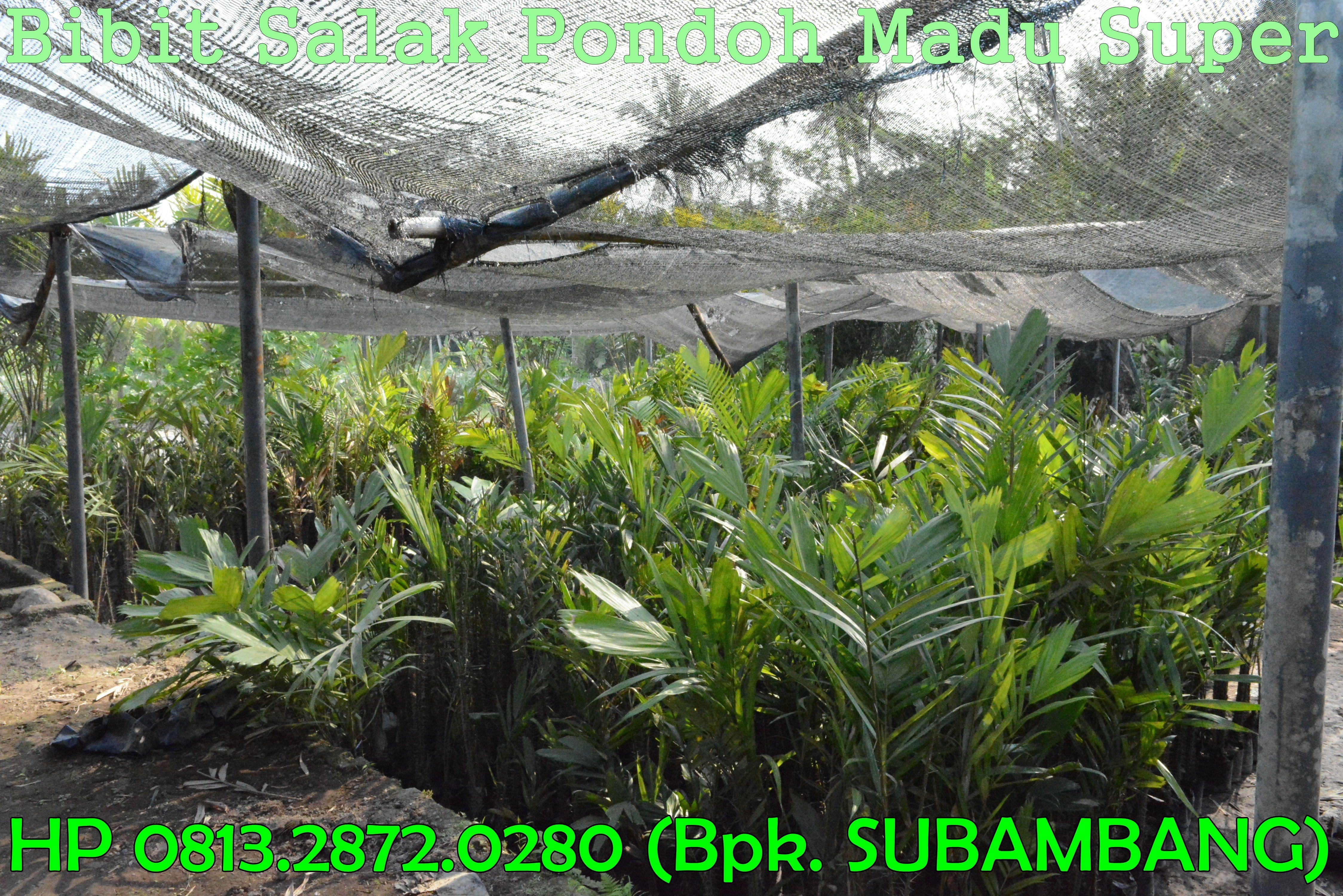 Perkebunan Organik Di Bogor
