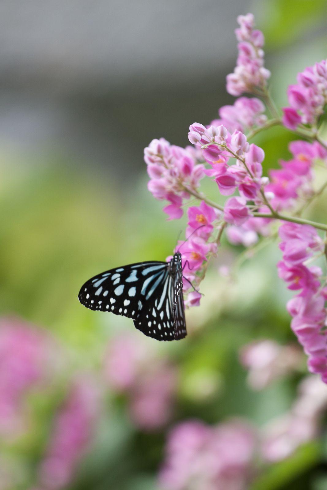 Butterfly Beautiful Butterflies Butterfly Butterfly Flowers