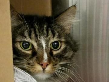 Check Out Sassy S Profile On Allpaws Com And Help Her Get Adopted