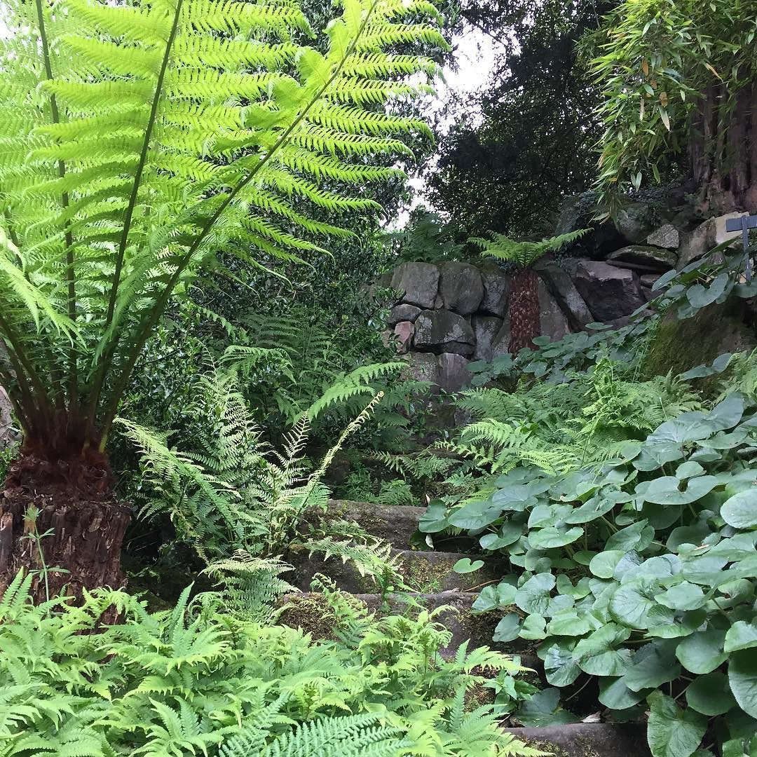 Lush green planting at biddulphgrange (mit Bildern)