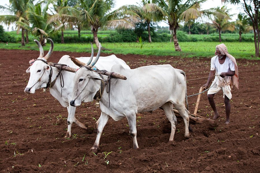 tamil farmer pictures clipart Google Search Coffee