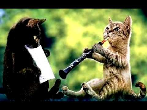 The Cat Al Markel Playing The Oboe-Cat Brian Sixby Holding The Music   Oboe,  Funny animals, Funny animal pictures