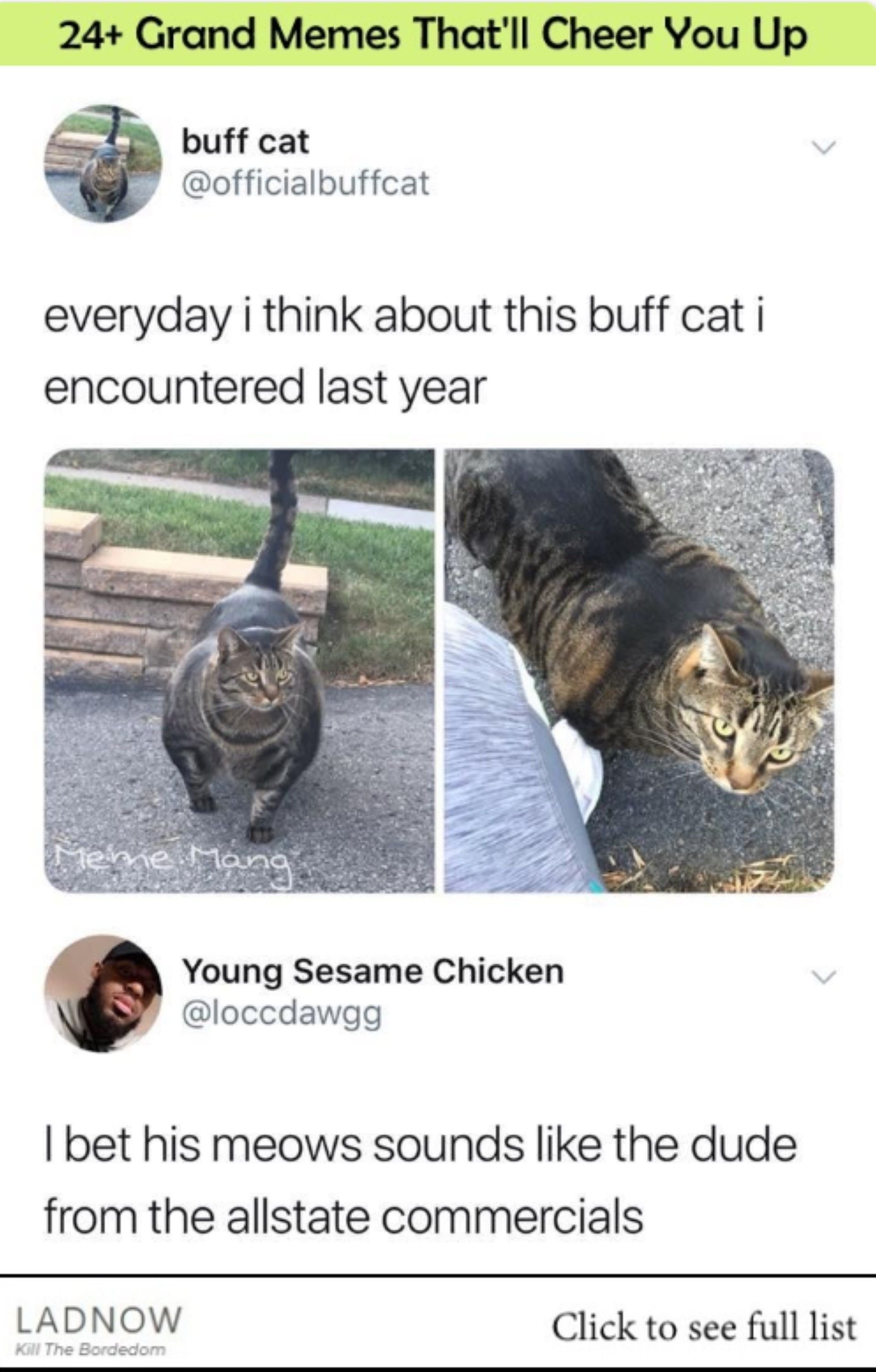 24 Grand Memes That Ll Cheer You Up Ladnow Cute Funny Animals Funny Animal Memes Animal Memes