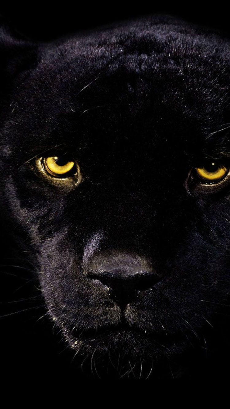 Iphone 6 Background Wallpaper 2018 Tecnologist Panther Pictures Black Panther Hd Wallpaper Black Panther Cat