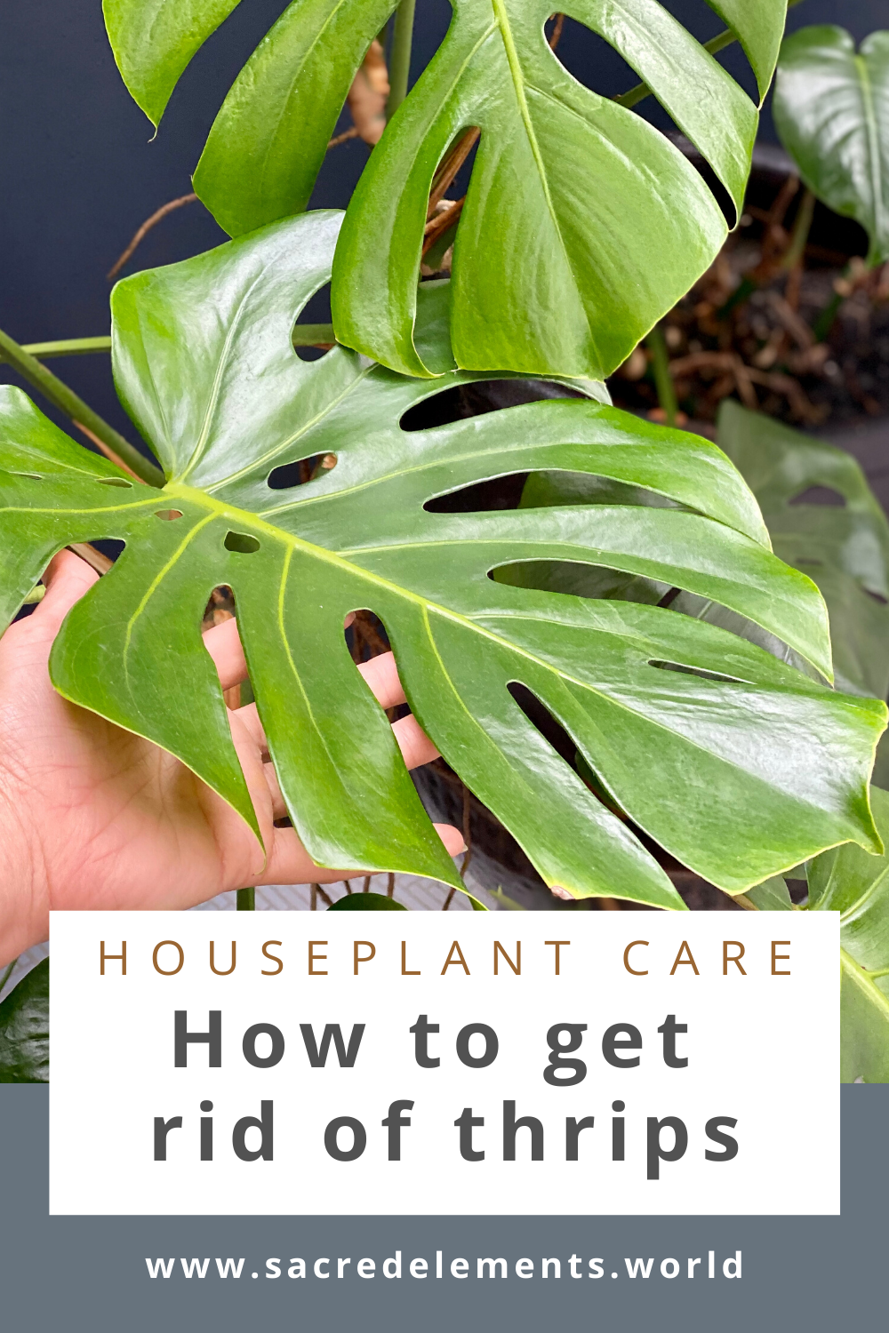 Pin On Plant Care Tips
