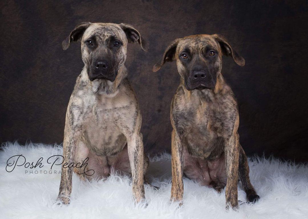 Winter Haven Fl Hound Unknown Type Meet A Dog For Adoption Dog Adoption Pet Adoption Pets
