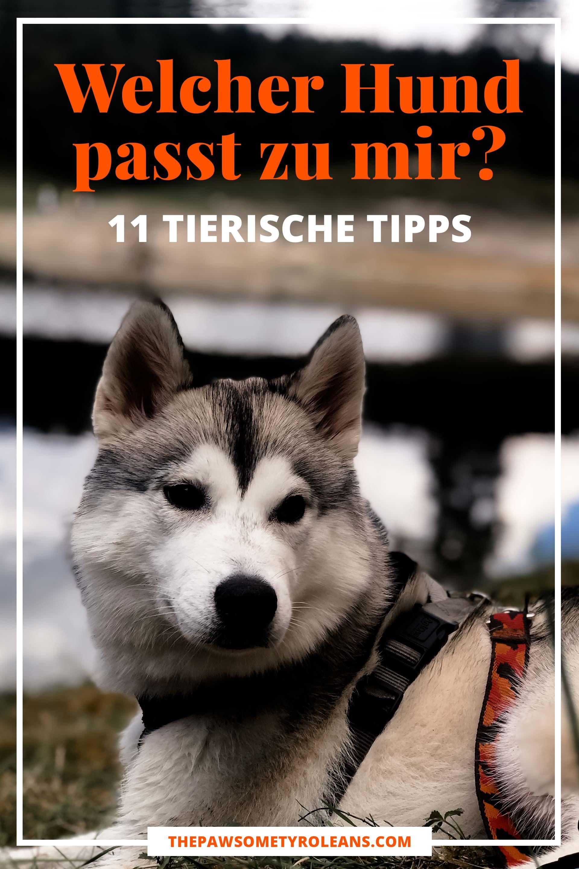 Welcher Hund Passt Zu Mir 11 Tierische Tipps Welcher Hund Hunde Und Welche Hunderasse