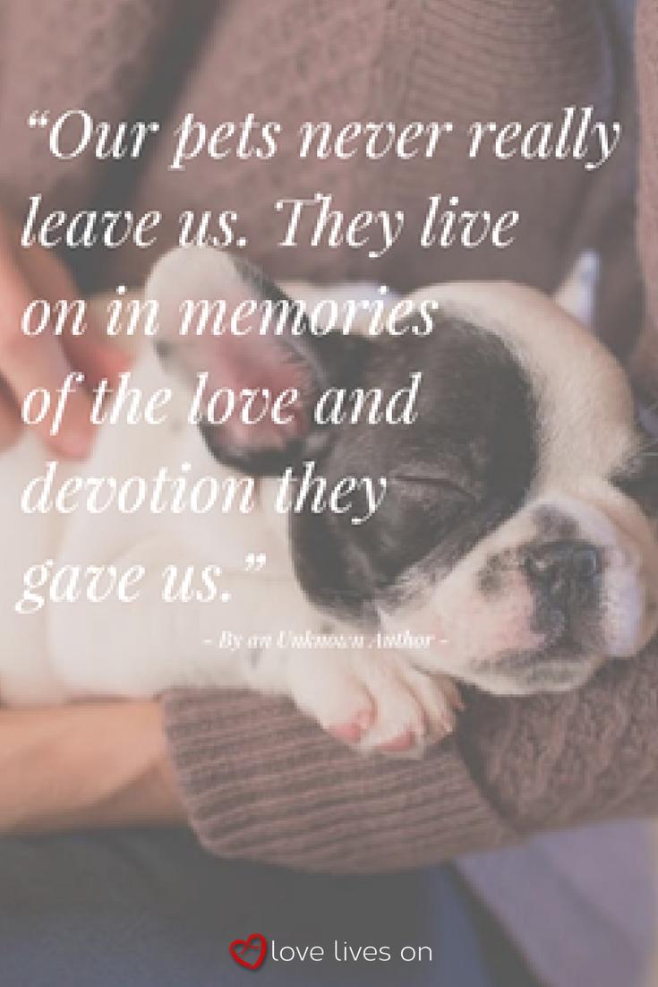 100 Best Sympathy Quotes Quotes Pet Loss Quotes Pet Sympathy