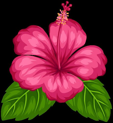 hawaiian aloha tropical flower pinterest hawaiian moana and rh pinterest com Tropical Drink Clip Art tropical flower clipart black and white