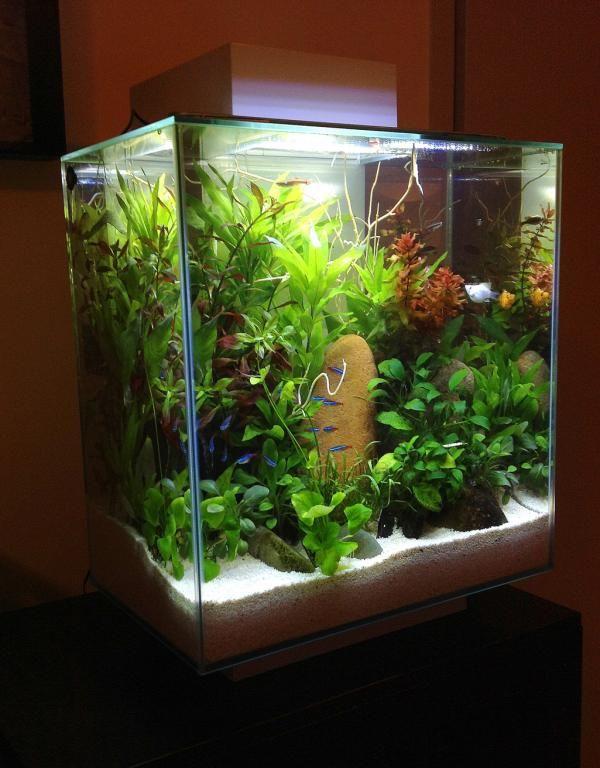 Fluval chi setup google search aquaria pinterest for Nano cube fish tank