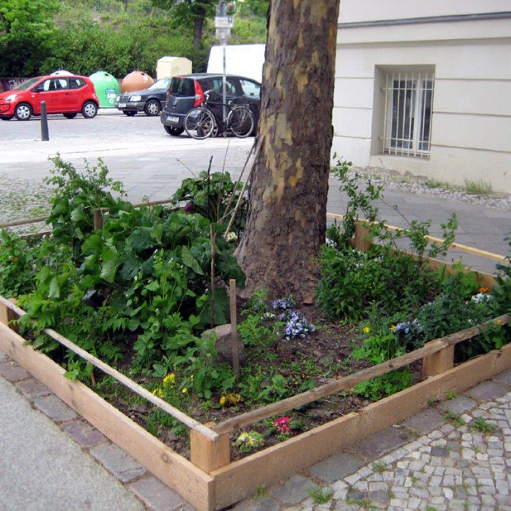 Guerilla Gardening Berlin Baumscheiben Bepflanzen Gardening Bepflanzung