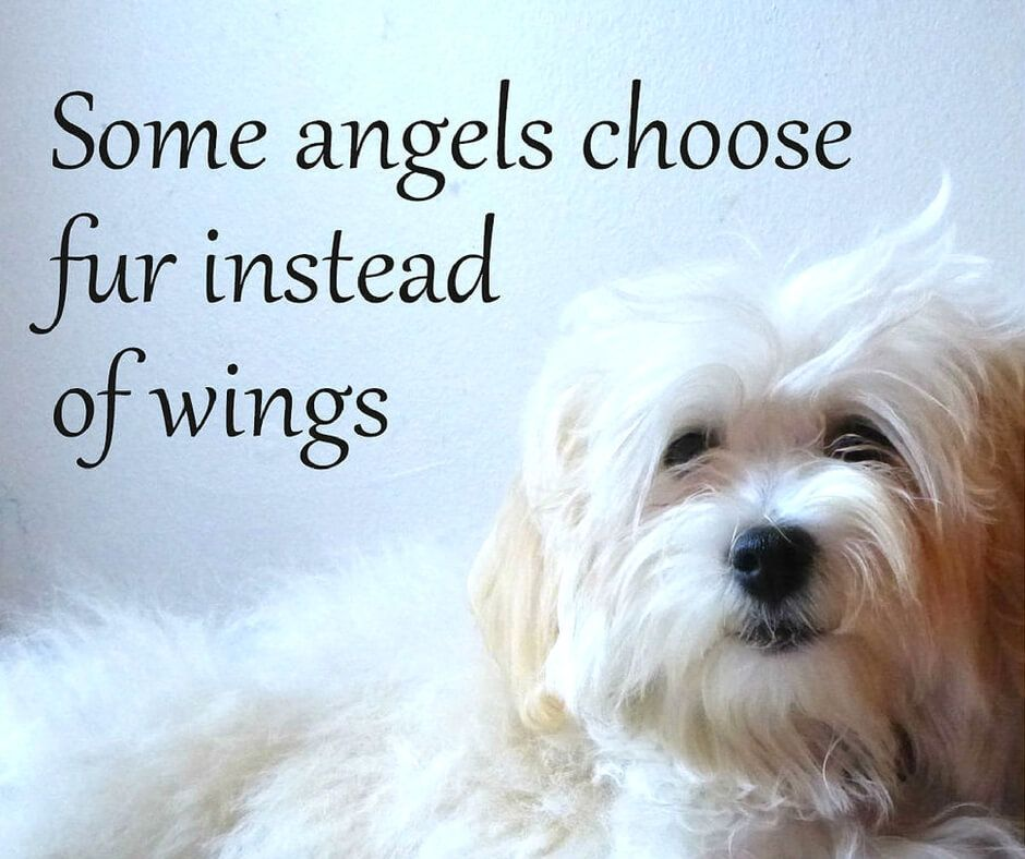 Quotes About Pets: 21 Inspirational Quotes Every Dog Lover Should Read