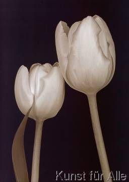 Prades Fabregat - Bora Bora Flower III