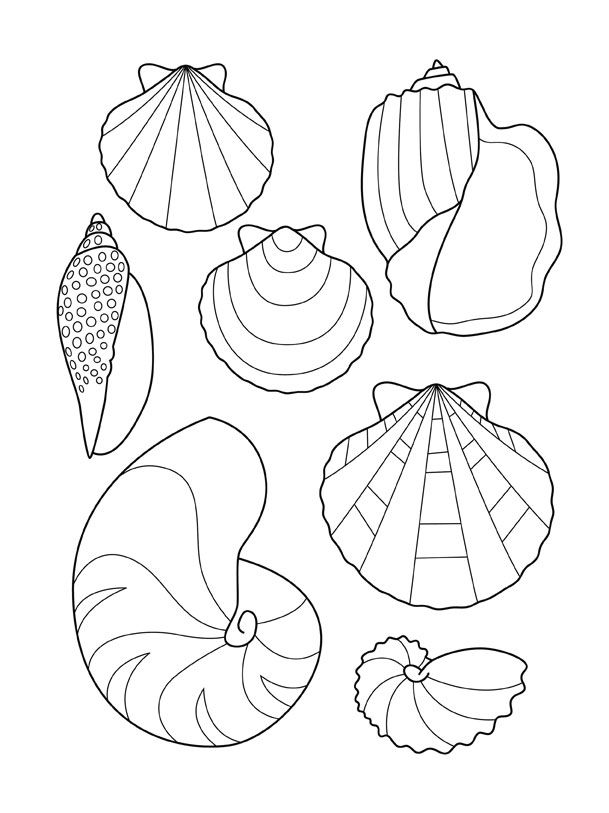 Coloriage coquillages fish pinterest coquillages - Coloriage de coquillage ...