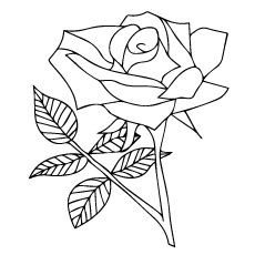 top 25 free printable beautiful rose coloring pages for kids  rose coloring pages flower