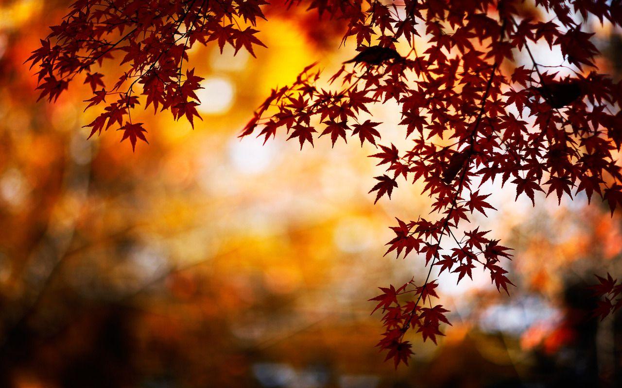 Autumn Leaves Autumn Leaves Wallpaper Bokeh Wallpaper Fall Background