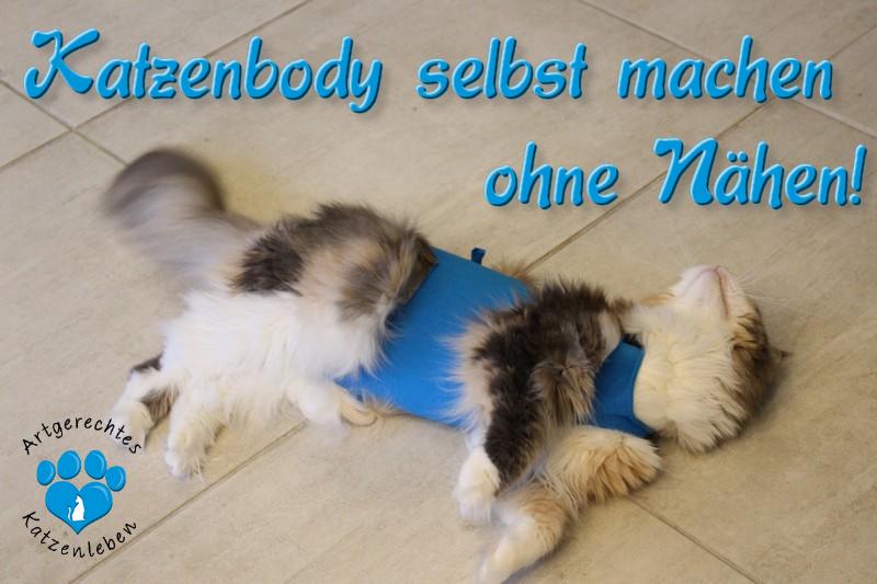 Katzenbody Kastrationsbody Selbst Machen Ohne Nähen