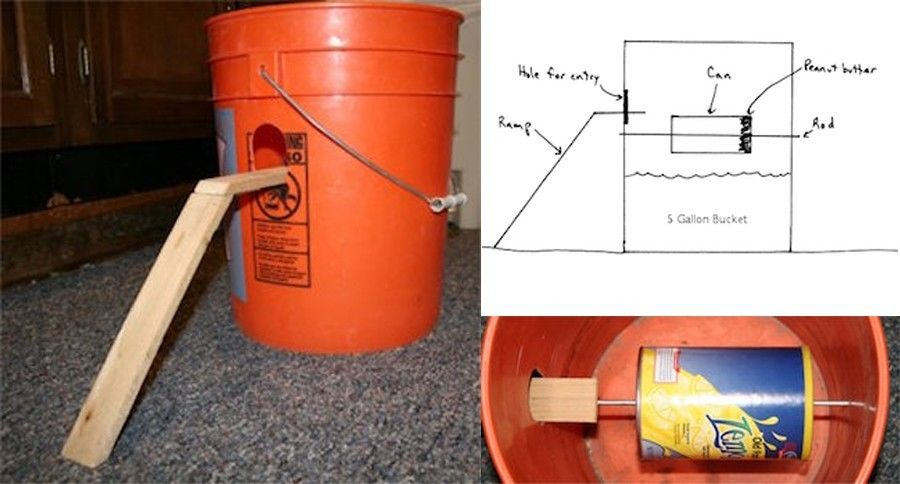 8 diy mouse traps you can make at home rat traps mouse