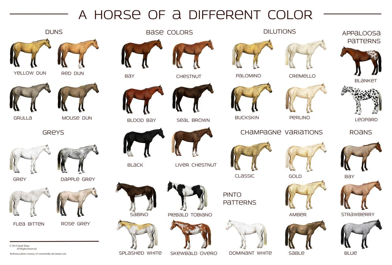 Here S A Really Nice Horse Color Chart By Sarah Slater
