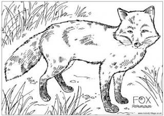 British Wildlife Colouring Pages Fox Coloring Page Coloring