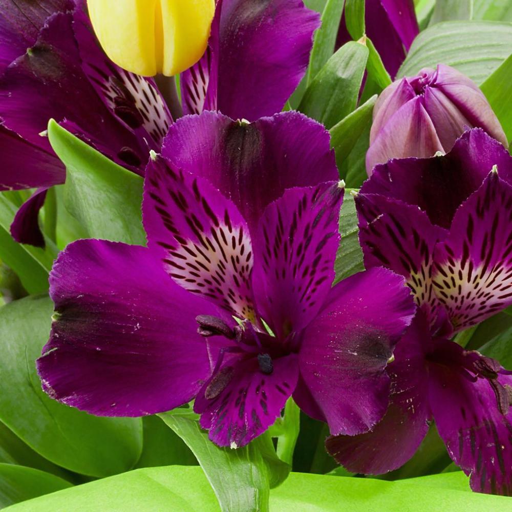 Names Of Purple Flowers For Wedding: Alstroemeria Inca Noble In 2020