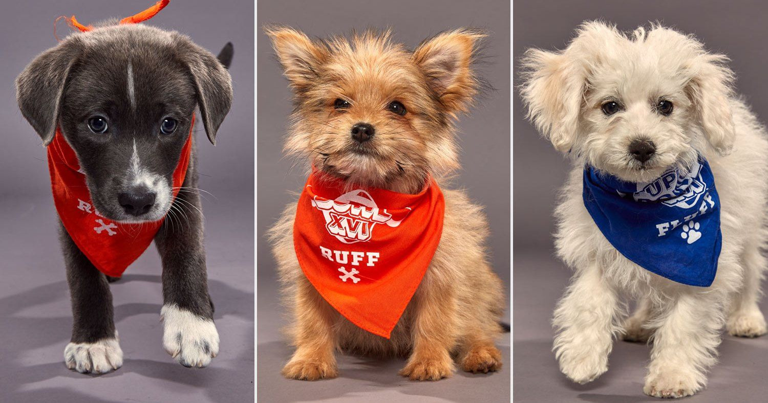 Puppy Bowl Is Coming! Meet the Adorable Pup Players Taking