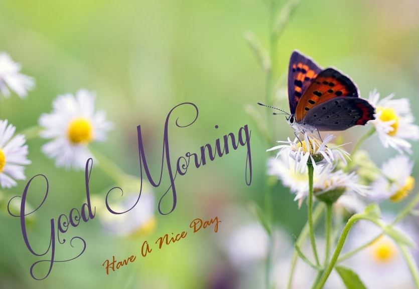 Cool Good Morning Pictures With Nature Jpg 835 577 Morning Pictures Good Morning Picture Morning Images