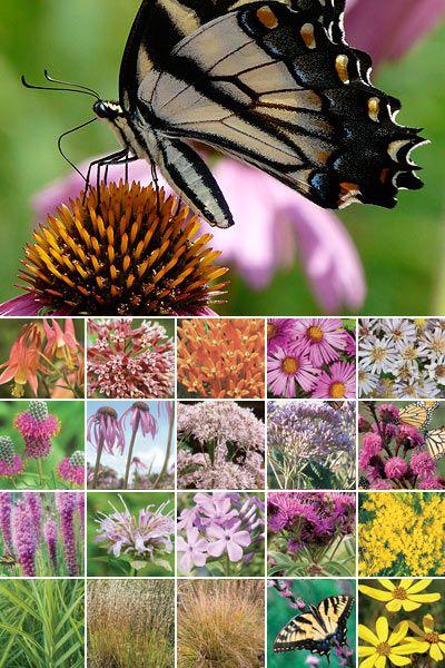 96 Plant Butterfly Garden WellDrained Soil in Full Sun – Plants for a Butterfly Garden