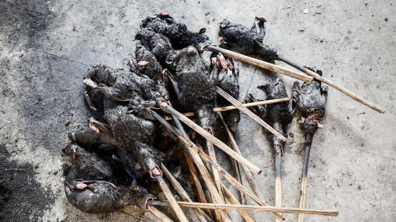 Fledermäuse sind eine Köstlichkeit in weiten Teilen Asiens