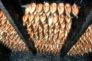 Kippers from Craster in the smokehouse