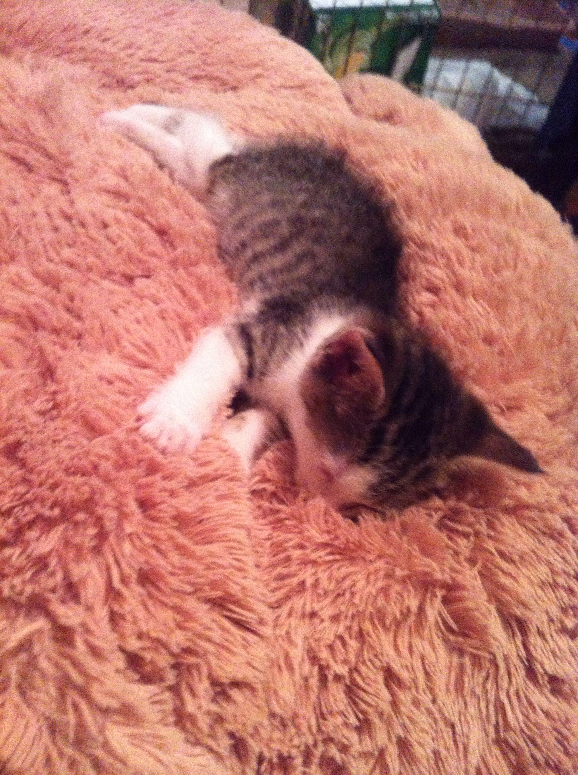 Pin On Kitties 3