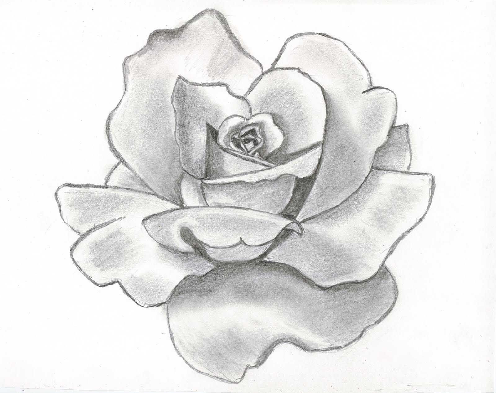 Drawing beautiful roses rose flower drawing wallpapers awesome