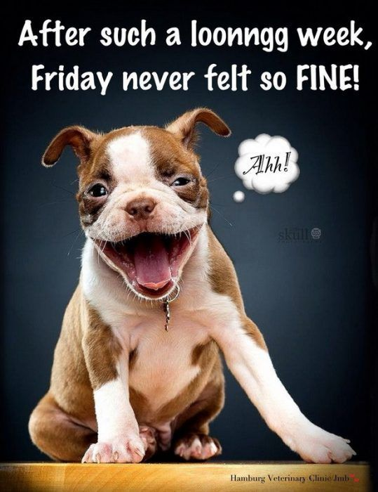 Funny Friday Funny and Happy Friday Funny Friday Funny and Happy Friday