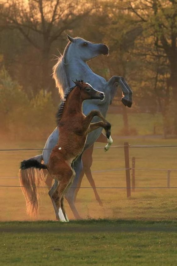 Promotes relaxation and reduces hyperactivity. Helps nervous, high-strung, or muscle-tight #horses.  #equine #equestrian #mustang #wildlife