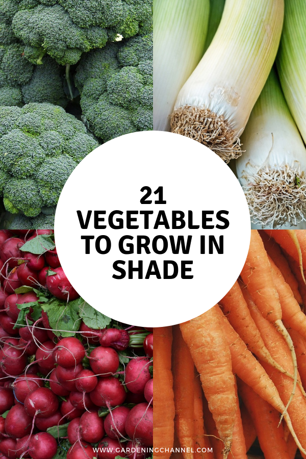 21 Vegetables That Can Grow In Partial Shade Home 400 x 300