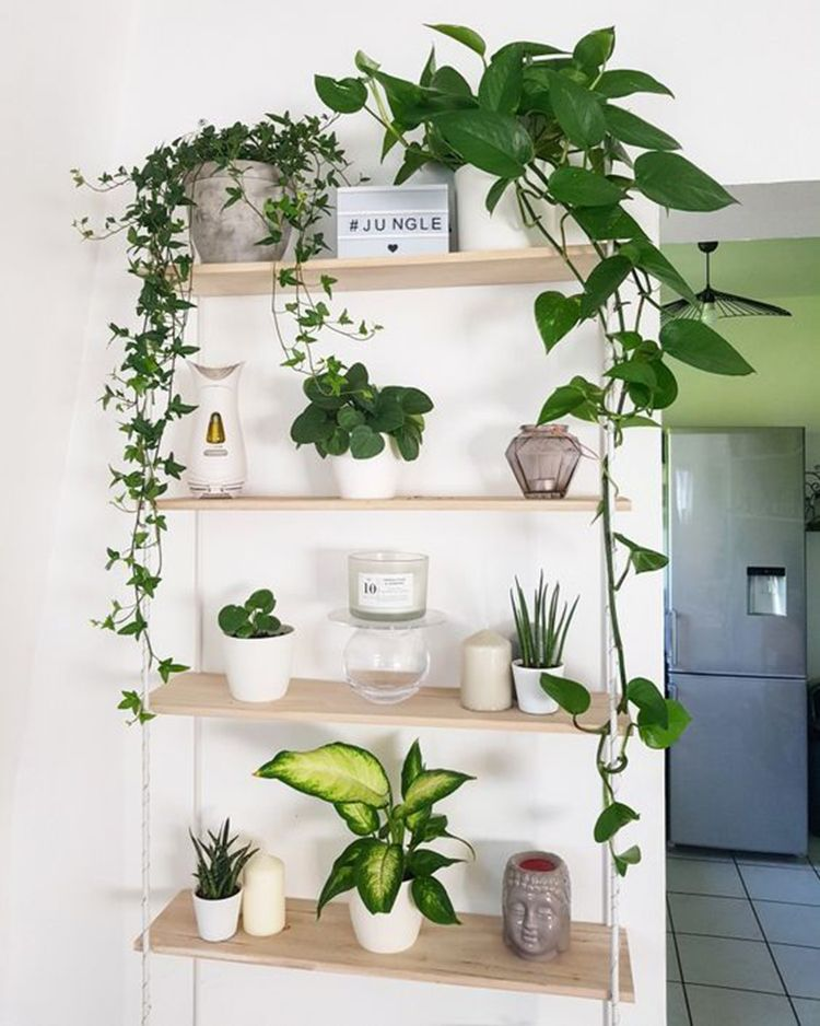 Indoor jungle small spaces gardening idees pour amenager son balcon bancos plant shelf green home decor garden herb wall also amazing decorations tips and ideas rh pinterest
