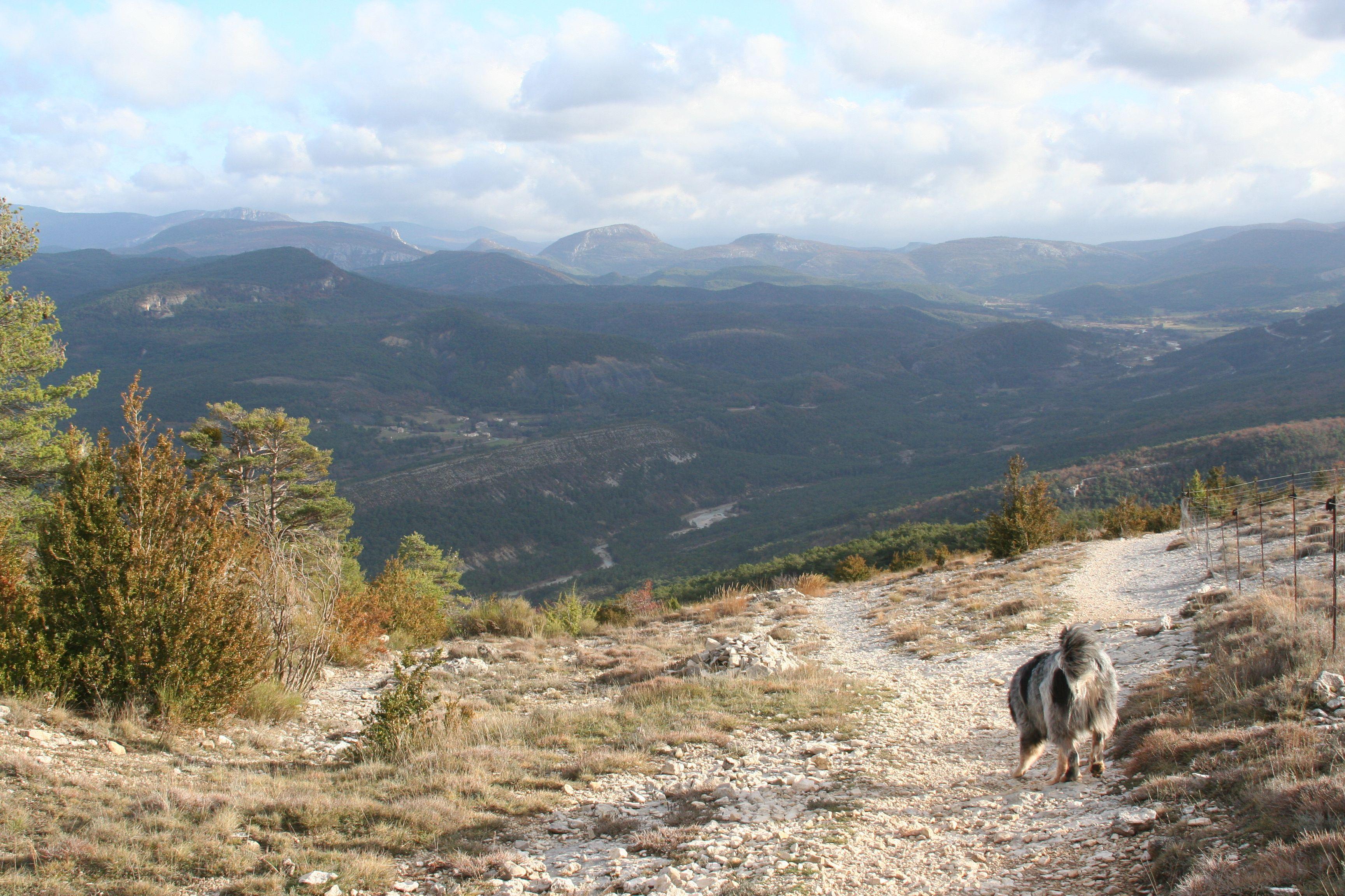 Les aigles verdon avec isko le montagne cendré