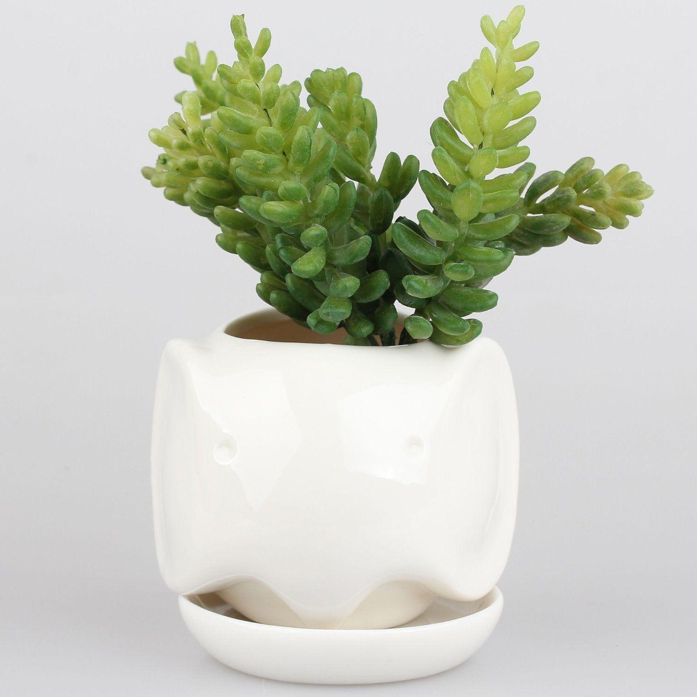 Amazon Com Little Dog White Ceramic Succulent Plant 640 x 480