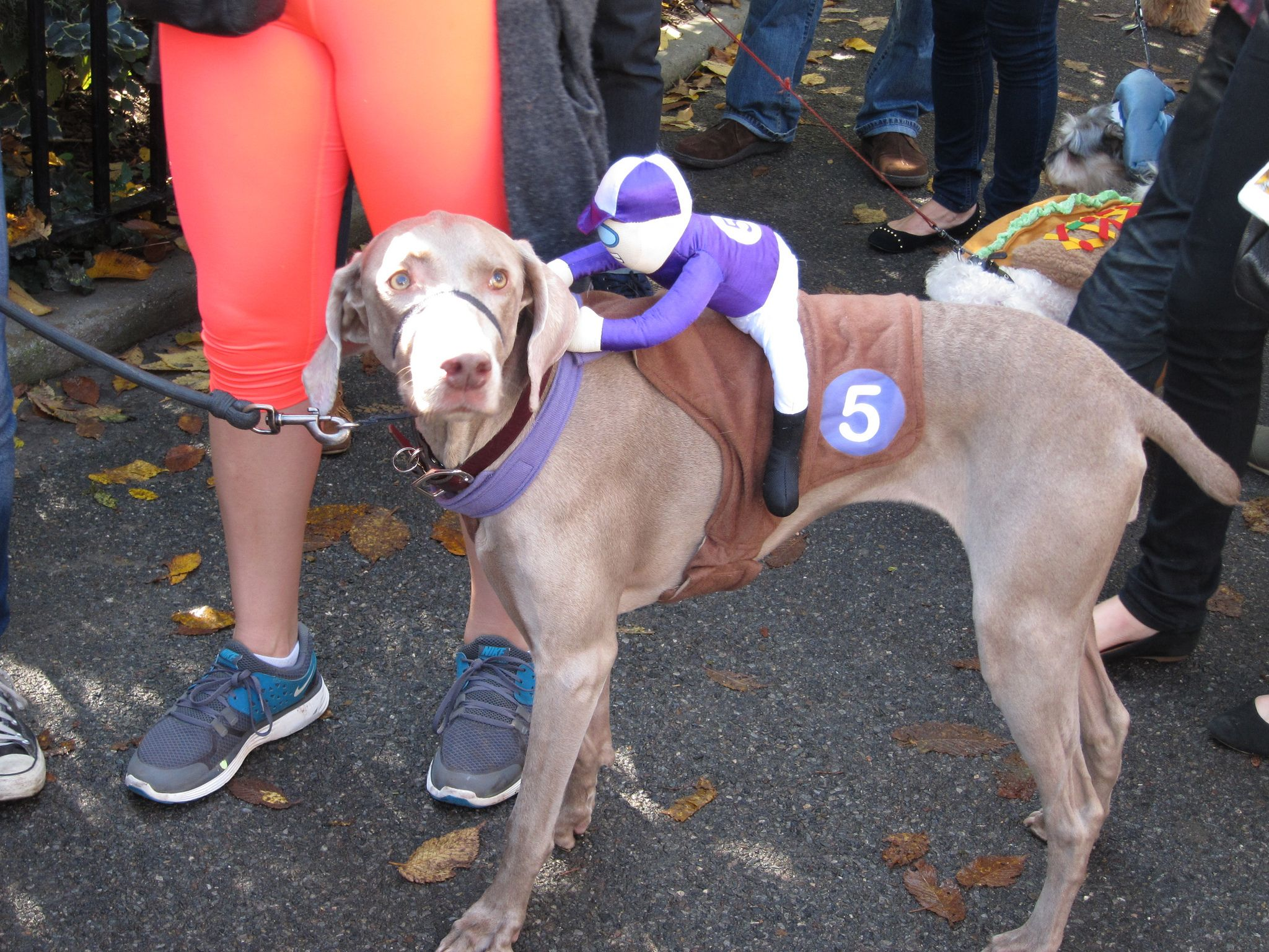 Weimeraner Race Dog Costume Big Dog Costumes Big Dog Halloween