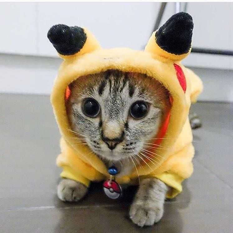 Пикачу картинки с кошками фото