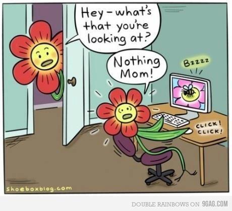 Cartoon flower sex