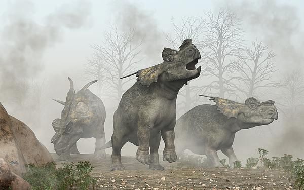 """The Search Party""  Three achelousauruses search  a foggy landscape.  The leader calls out into the air, while one of the others peers into the mist, and the third sniffs the ground.  Perhaps they have become separated from their herd and are looking for a way back or perhaps a young one has gotten lost in the fog.  With Tyrannosauruses inhabiting the same region, this could be a rather dangerous situation for this trio of ceratopsid dinosaurs."