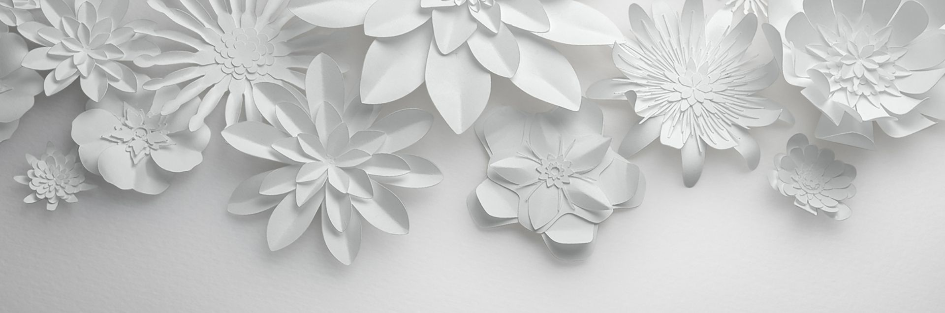 Bialy Papier Kwiaty Ciete W Tle White Paper Flowers Flower Backgrounds Paper Flowers