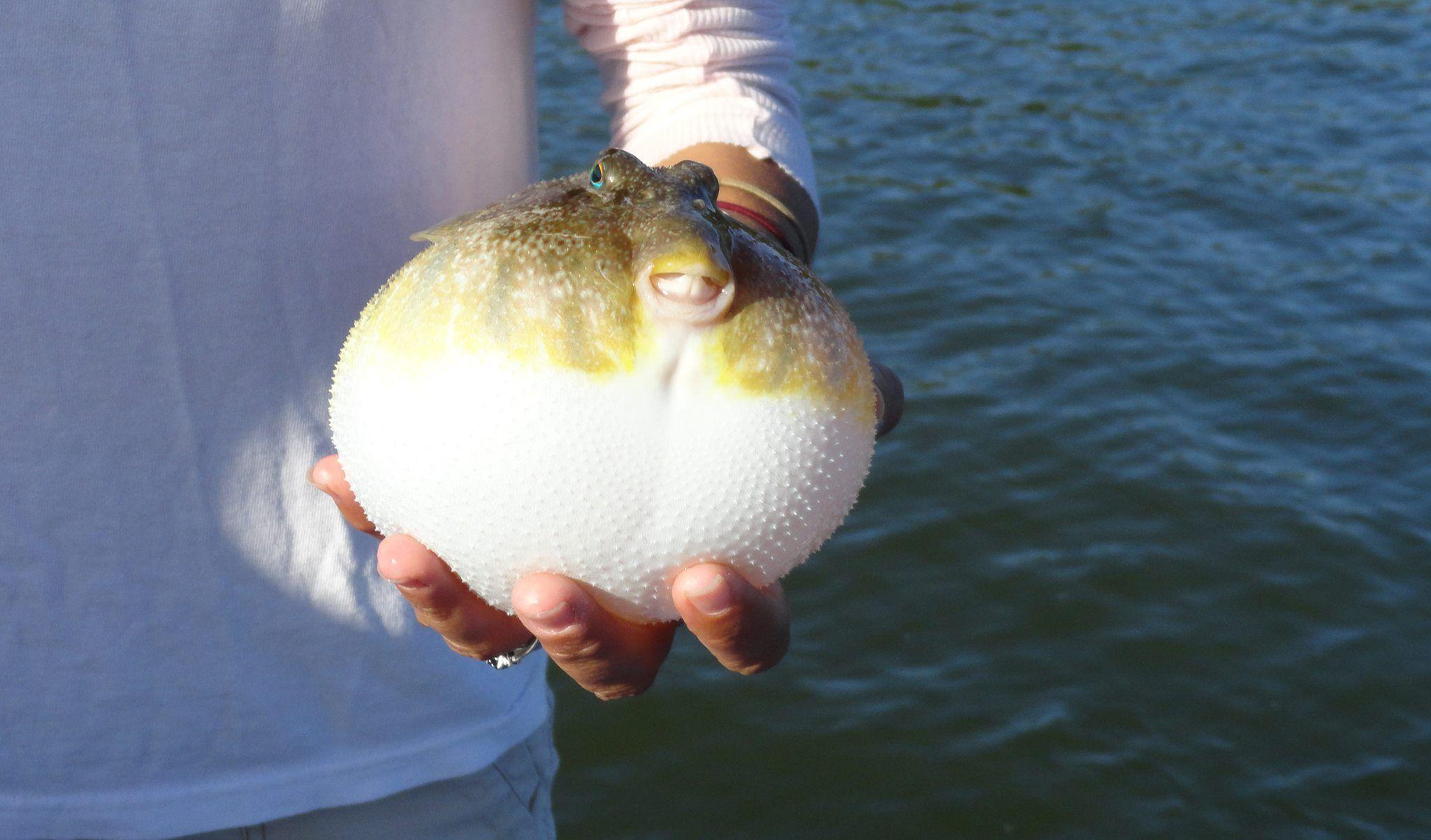 Puffer Fish...happy fish. So cute:)