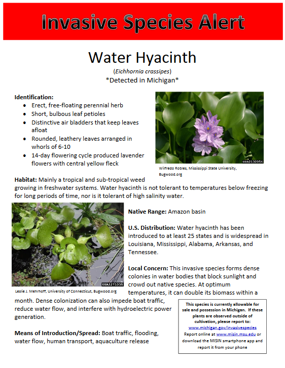 Michigan Aquatic Invasive Species *report sightings to ...