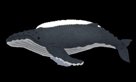 「クジラ イラスト ザトウクジラ」の画像検索結果