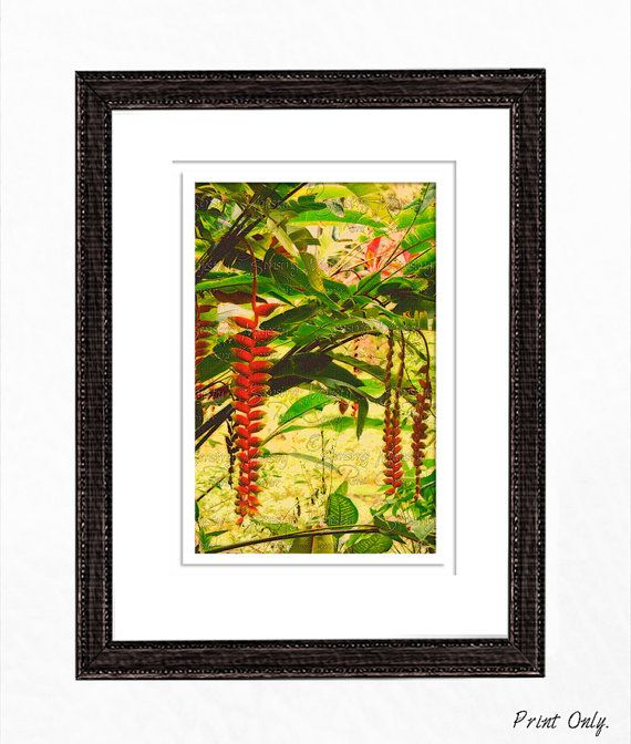 Etsy $24 24x36 or smaller, Tropical Flower Photography FREE Shipping ...